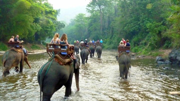 Pourquoi je ne monterai jamais sur le dos d'un éléphant ( et pourquoi vous devriez absolument faire pareil)